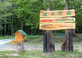 遊々の森入口